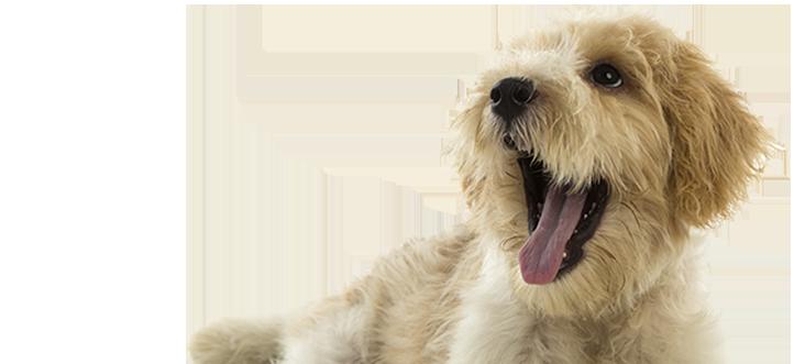 serviços de estética canina